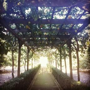 Lotus Land Citrus Grove