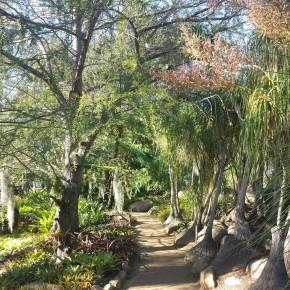 Lotus Land Gardens