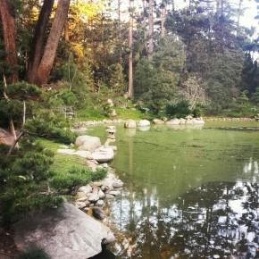 Lotus Land Zen Garden
